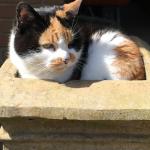 Cat Boarding in Blackshaw Moor