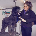 Dog Grooming in Stallington