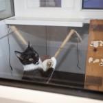 Cat Boarding in Stillington
