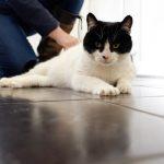 cat kennel in Leek