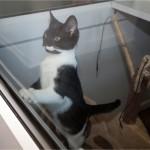 Cat Kennel in Blackshaw Moor