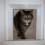 Cat Boarding in Cheddleton