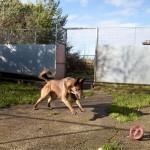 Dog Boarding in Stallington