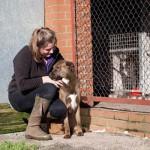 Dog Kennels in Leek